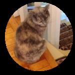 promenade chat